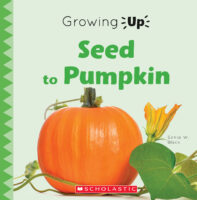 Growing Up: Seed to Pumpkin
