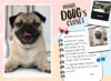 Doug the Pug®: Dressed for Success