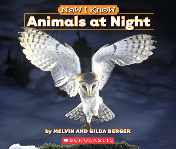 Now I Know: Animals at Night