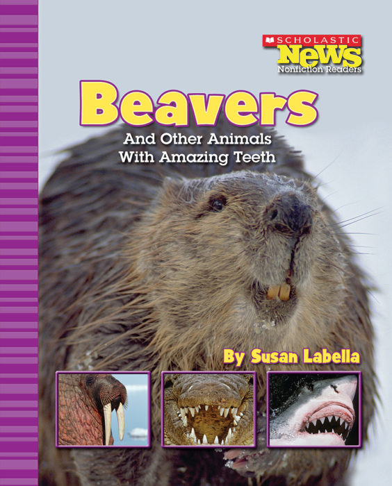 Scholastic News Nonfiction Readers®-Animals: Beavers