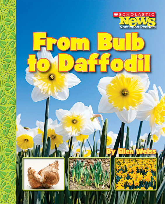 Scholastic News Nonfiction Readers-How Things Grow: From Bulb to Daffodil