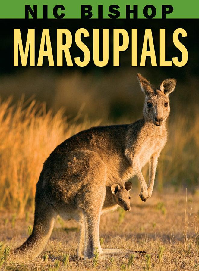 Nic Bishop - Nic Bishop Marsupials