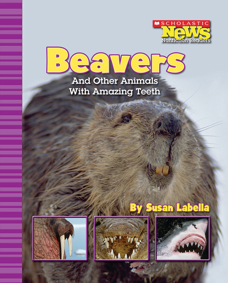Susan Labella - Beavers and Other Animals With Amazing Teeth