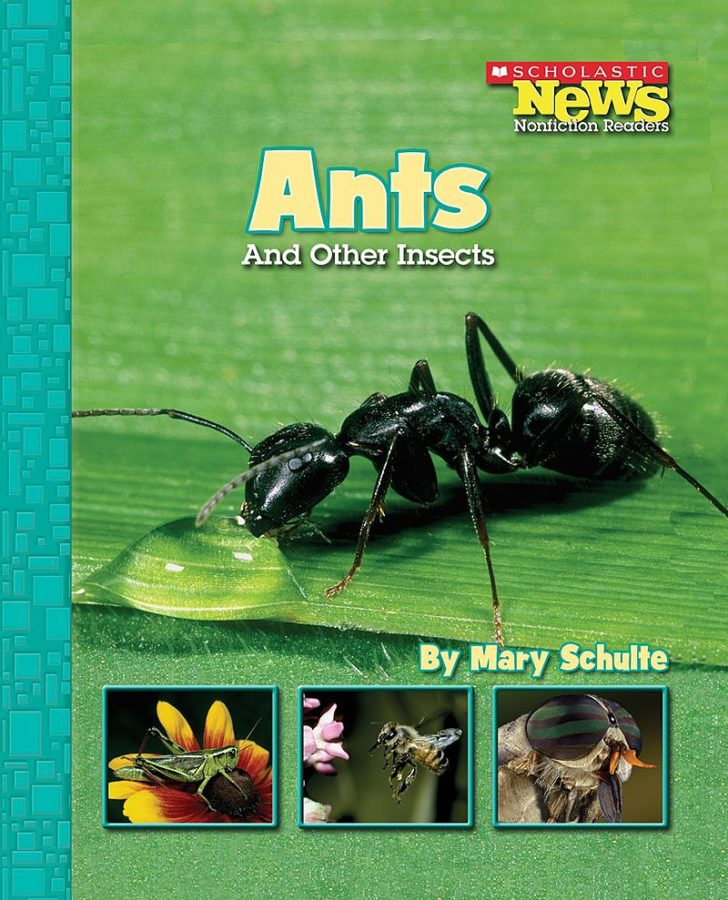 Mary Schulte - Ants and Other Insects