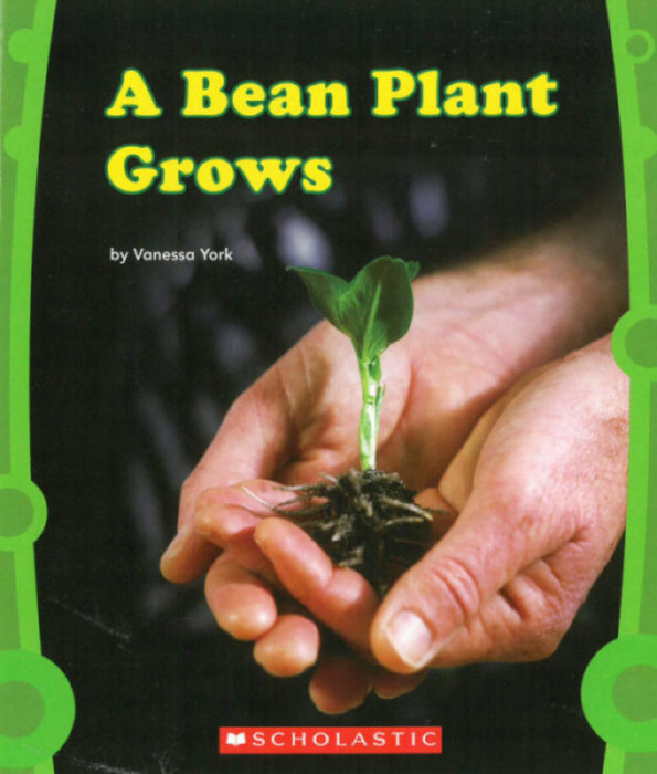 A Bean Plant Grows by Vanessa York - Paperback Book - The