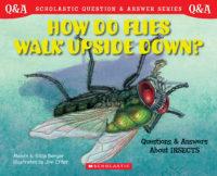 Scholastic Q & A: How Do Flies Walk Upside Down?