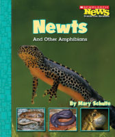 Newts and Other Amphibians