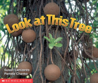 Look at This Tree