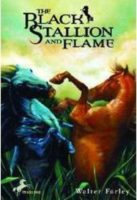 Black Stallion And Flame