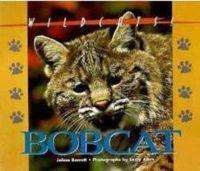 Bobcat (Wildcats Of North America)