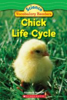Chick Life Cycle